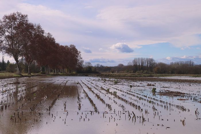 Flooded land Sky Cloud - Sky Scenics - Nature Plant Water Nature Tree Tranquility Agriculture Tranquil Scene Land Landscape Field
