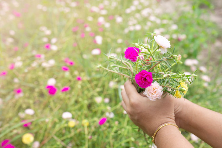 Midsection of woman holding pink flowering plant