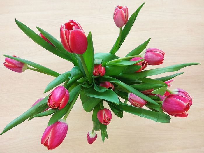 Top view of a bouquet of pink tulips Petal Holiday Wedding Happy Plants And Flowers Green Tulips Tulips🌷 Top View Bouquet Flower Plant Flower Head Nature Close-up No People Green Color Beauty In Nature Freshness Leaf Fragility Growth White Background Springtime Decadence