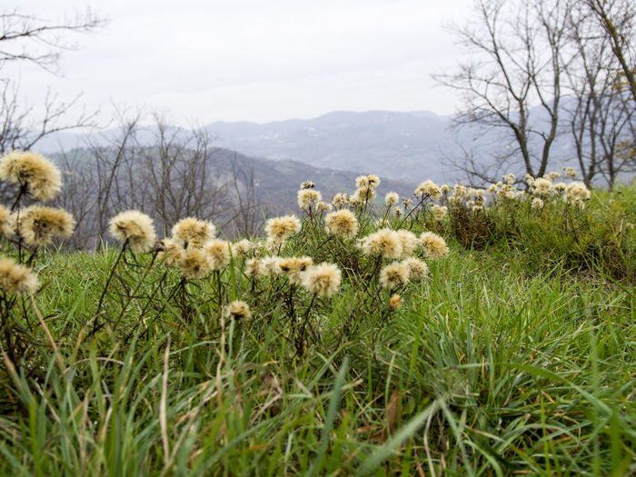 Plant Land Field Growth Sky Flower Nature Beauty In Nature Grass Flowering Plant No People Day Freshness Environment Tranquility Landscape Fragility Tree Scenics - Nature Domestic Animals Flower Head