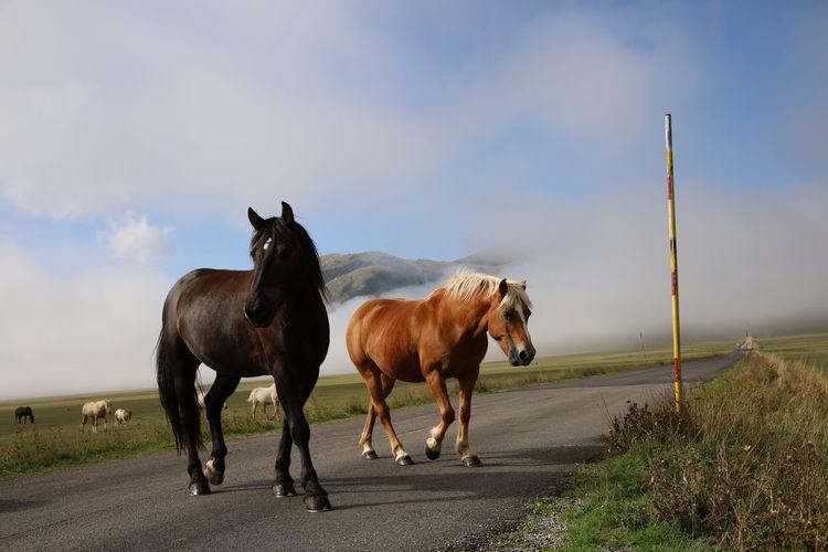 Horses on road against sky