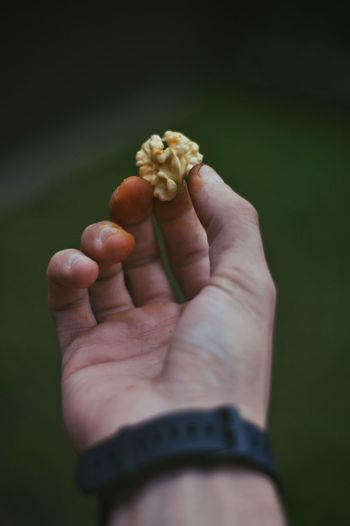 Nuts Mountain Ingushetiya EyeEm Selects Human Hand Human Body Part Hand One Person Holding Food Food And Drink Farmer