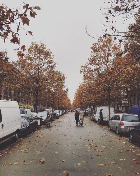 Fall in