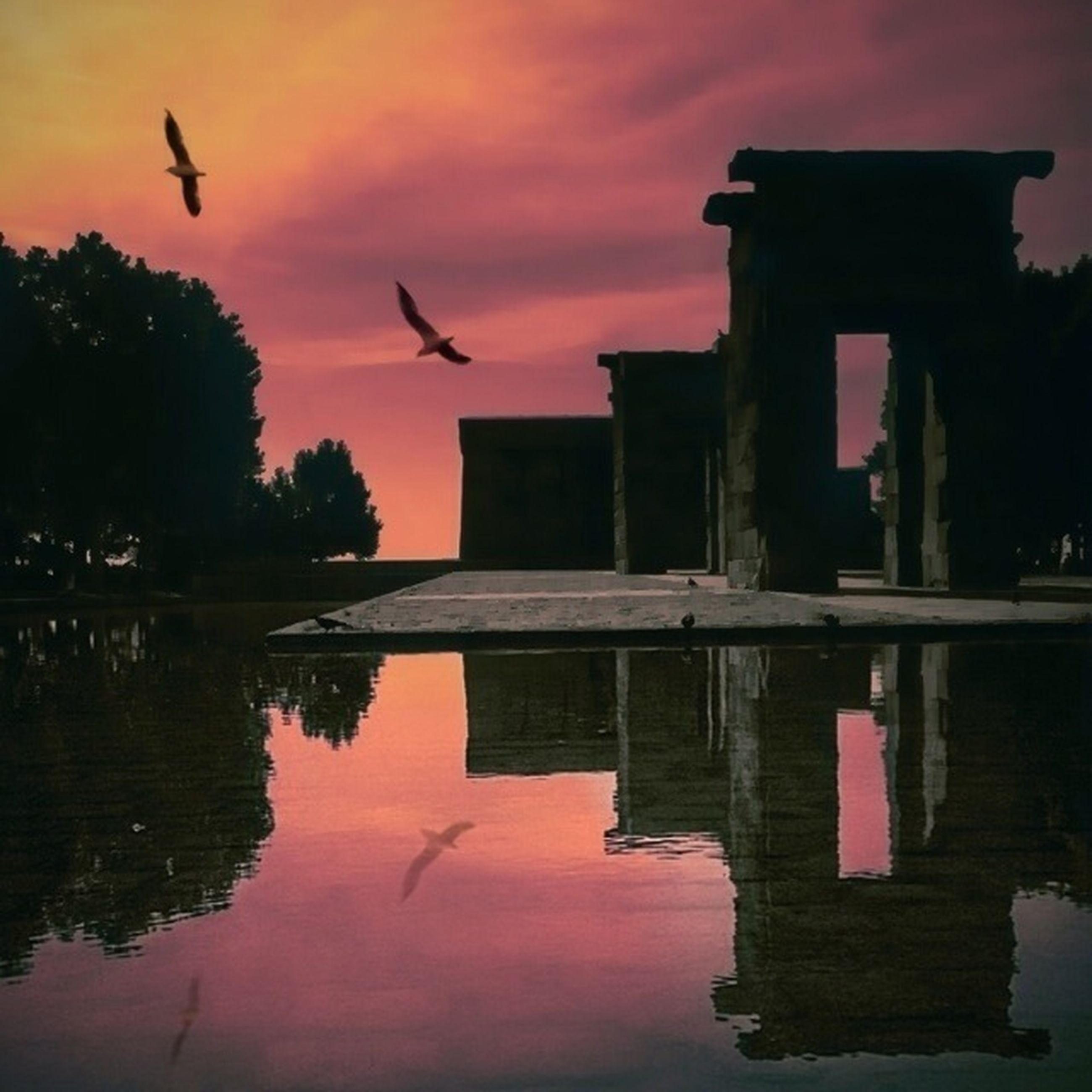 bird, flying, animal themes, animals in the wild, wildlife, built structure, architecture, building exterior, water, spread wings, sky, sunset, mid-air, reflection, flock of birds, one animal, silhouette, waterfront, seagull