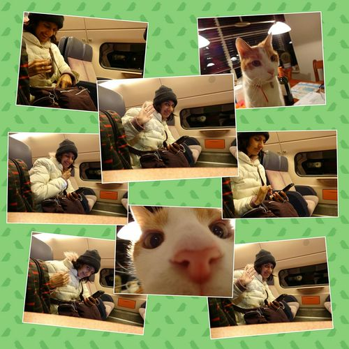 Selfies and a Nosy Cat Me Myself And I Having Fun with my new Sony DSC-QX10 in the Train Alphen Aan Den Rijn Netherlands (c) Shangita Bose 2015 All Rights Reserved.