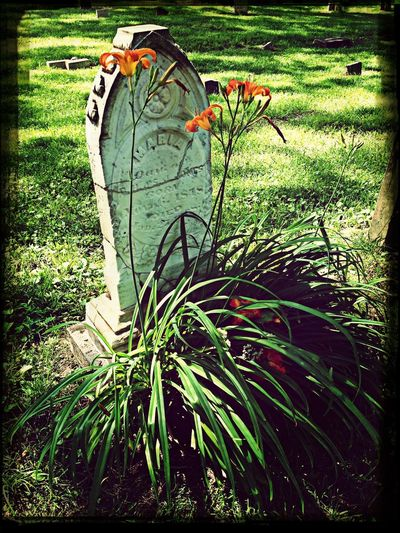 Beautiful grave with lilies growing at its base Graveyard Beauty Graveyard Collection Rest In Peace Historic Cemeteries
