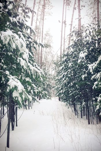 Throwback to my winter wonderland First Eyeem Photo