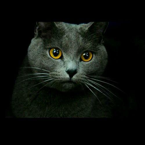 Cat Animal Desperados Beautiful