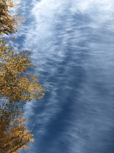 Autumn Clouds Plant No People Tree Nature Cloud - Sky Water Sky Beauty In Nature Tranquility Outdoors Scenics - Nature Day