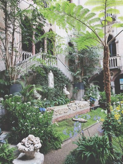 Beautiful museum! This is an indoor garden! so pretty ! 😍 Isabella gardner museum! Tree Architecture Built Structure Window Indoor Garden Garden Plant Isabella Stuart Gardner Museum Boston