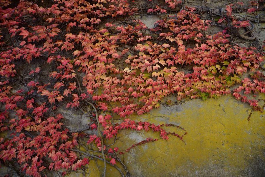 Photo Autumn Colors YAMAGATA SAKATA