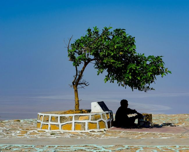 Vendor A Tree Single Tree Infinity India Alone Single Person One Person Nature White Dessert Snap A Stranger Stranger
