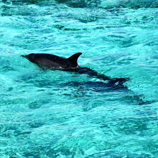 Animals Check This Out Quick Shot Delphin Ägypten  Ägypten Red Sea Bluewater Insel Orange