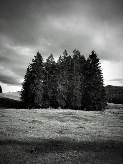Group of trees in The Bavarian Alps / Gruppe von Bäumen auf einer Wiese Bayern Germany 🇩🇪 Deutschland Bavarian Alps Bavaria Tannen Schwarzweiß Black & White Hochformat Bavaria Germany 🇩🇪 Deutschland Tree Plant Cloud - Sky Sky Land Environment Landscape Nature Tranquil Scene Tranquility Beauty In Nature Scenics - Nature Forest Pine Tree