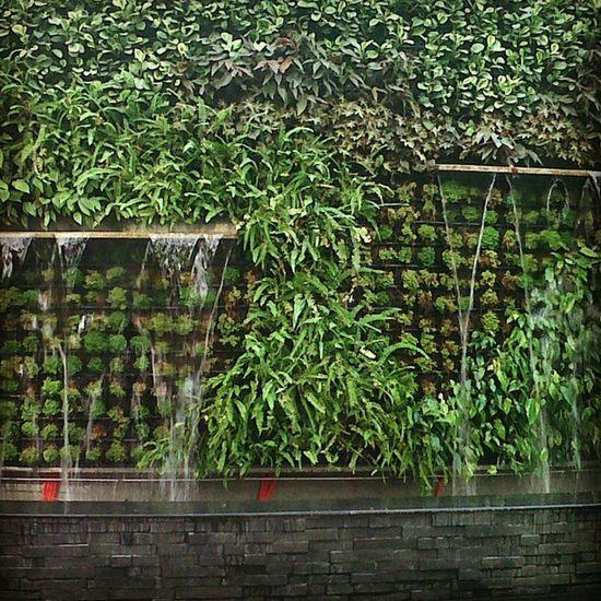 Water feature almost done.... nice =) Gramercy Garden Verticalgarden Green plants centuryproperties