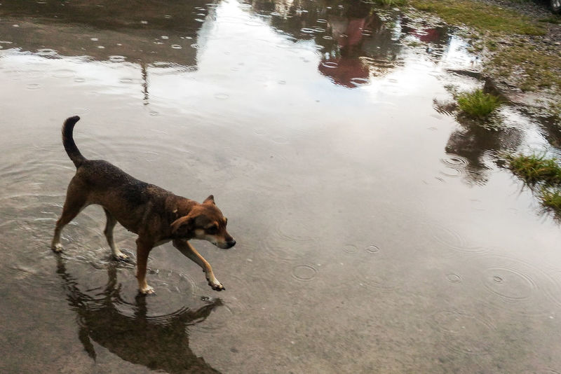 Wet Dog. Dogs Dogslife Candid Outdoors No People Asuszenfone2 Attemptsatphotography Randomphotography Rainy Afternoon.