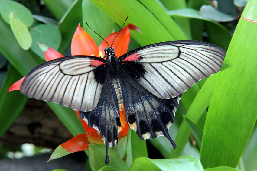 Animals Live Beauty In Nature Butterfly Butterfly - Insect Flower Insect Nature Nectar