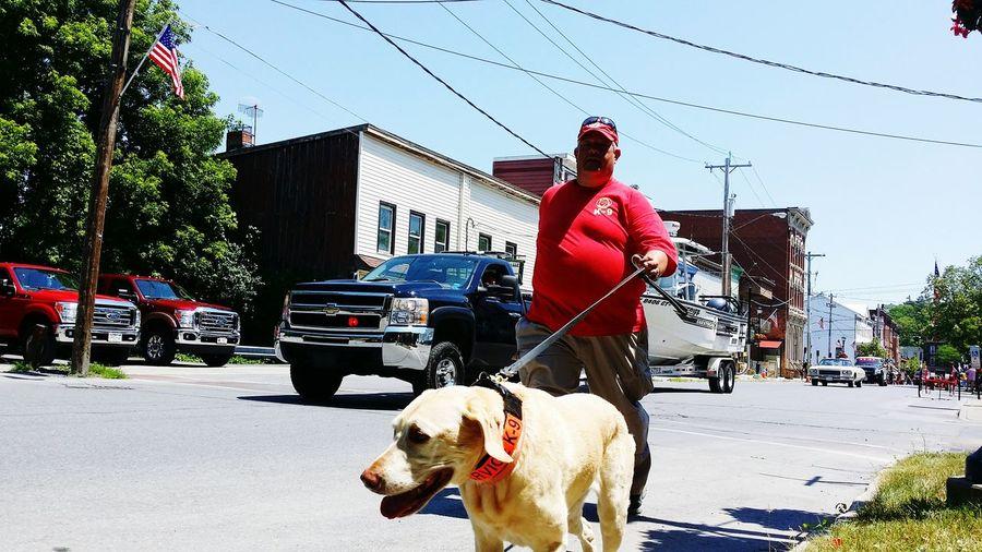 Service Animals Service Dog Rescue Dog K-9 Unit K-9 Dog Labrador Retriever Labrador Firefighter Heros HERO Celebration New York Patriotism Patriotic America EyeEm Best Edits EyeEm Best Shots Life Saver Respect