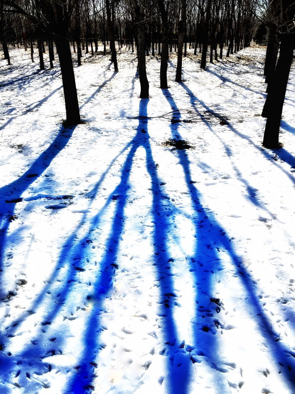 winter, cold temperature, snow, shadow, sunlight, tree, weather, nature, frozen, day, outdoors, beauty in nature, tranquility, blue, real people, scenics, landscape, warm clothing
