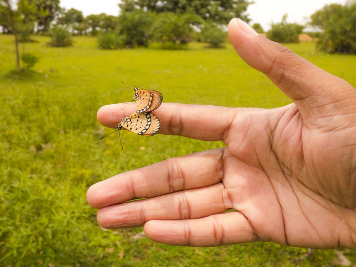 Beautiful Butterfly BUTTERFLY METTING Hand India Indian Insects  Love Love Making Nature Naturelovers On Hand Palm