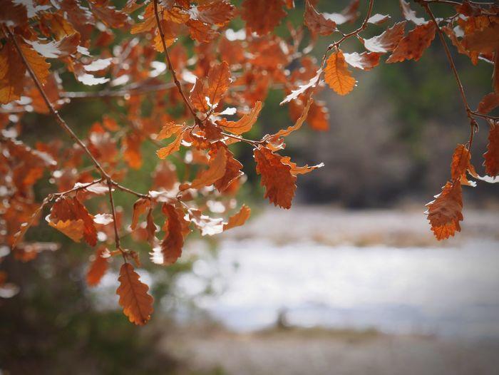 The Great Outdoors - 2017 EyeEm Awards The river Beauty In Nature Outdoors Eyemphotography EyeEm EyeEm Best Shots EyeEm Best Edits EyeEm Gallery LandscapeEyeEm Best Shots - Nature EyeEmBestPics Nature