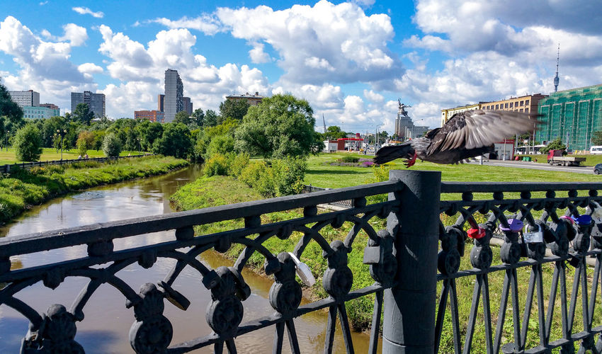 Cloud - Sky Park - Man Made Space Animal Themes Bird City Building Exterior Architecture No People Day Water Pigeons Wedding River Russia City Яуза река Railing Architecture Москва Moscow Metal Cityscape Tradition Traditional