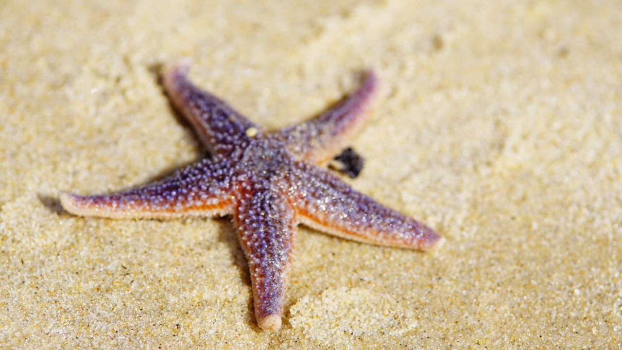 Close-Up Of Dead Starfish On Sandy Beach