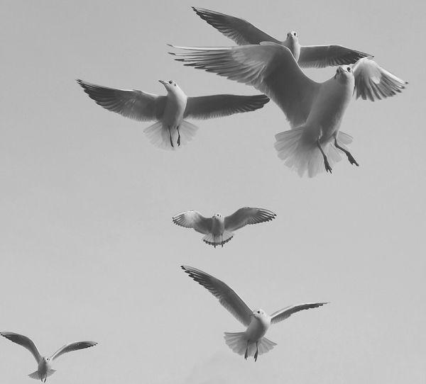 Die Vögel Taking Photos Animals Steinhude-am-meer.de - Dein Meer-Foto