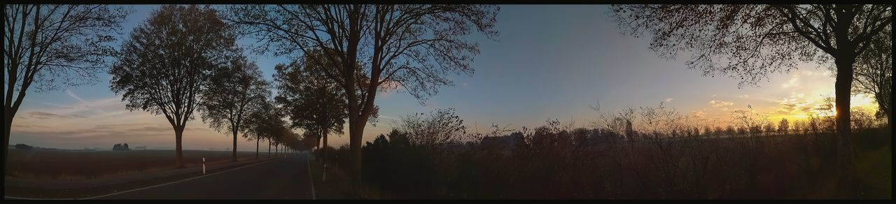 Panoramic Wintermorningscene 04_11_18 Sunrise Morning Morgens Winter Cold Panorama Panoramic Edited Filter Nature Landschaft Landscape Road Straße Trees Bäume Countryside Outside Land Scene Rahmen Picture Frame Frame Frame Added Cut Edges Colorful Redmi Note 4x Shot City Tree Sky