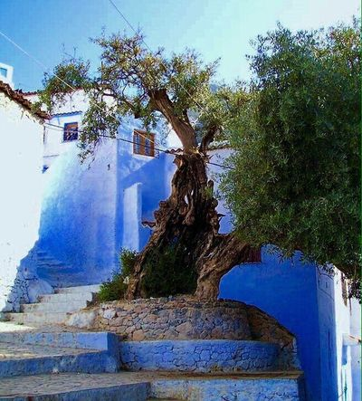 Showcase April Chefchaouen Chefchaouen Blue City The Adventure Marocco Begins Marocco Nordafrika Color Photography Street Photography