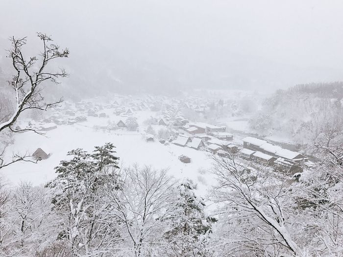 Cold Temperature Winter Snow Weather Nature Tree Beauty In Nature Bare Tree Frozen Tranquility Tranquil Scene Outdoors No People Scenics Day Landscape Sky Fog Snowing Japan Shirakawago WeekOnEyeEm EyeEmNewHere Beauty In Nature Snowfall