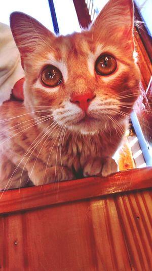 Cat Closeupshot