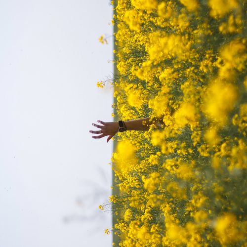 from that moment on, my world was turned upside down. Canola Canon Canonphotography EyeEm Gallery EyeEmBestPics EyeEm Best Shots Showcase: January Southafrica Capetown 50mm F1.8 Hands Mvmtwatches Creativity Better Look Twice