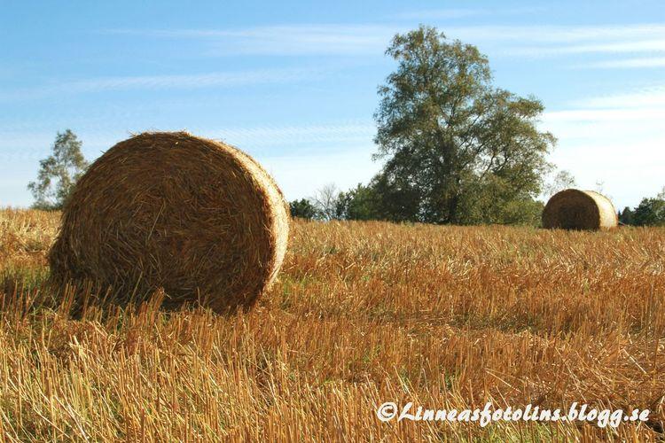 Http://linneasfotolins.blogg.se Country Life Atumn Nature