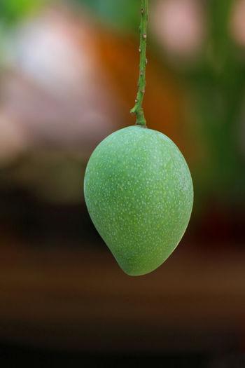 Mango green,