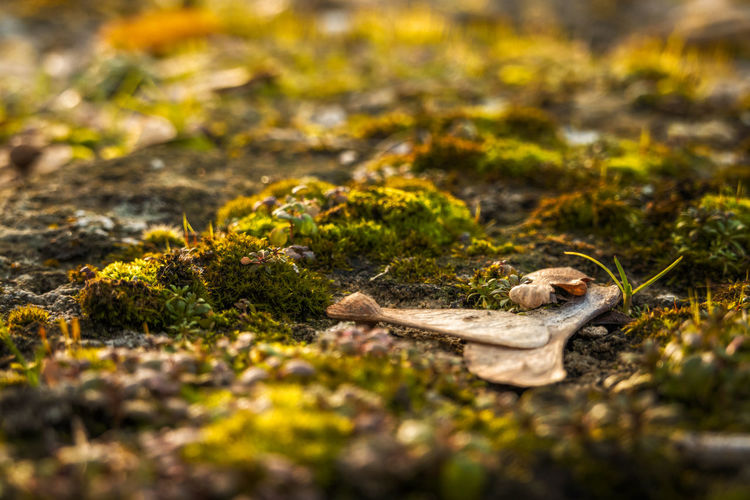 Close-up of fallen leaves on land
