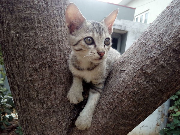 Domestic Cat Domestic Animals One Animal Animal Themes Pets Looking At Camera Mammal Feline Portrait No People Tree Trunk Day Close-up Outdoors Cat Photography Cat Portrait Cats Kitten Kittens Of Eyeem Cats Of EyeEm Kitten On A Tree Cat On The Tree Pet Pet Photography  Nature