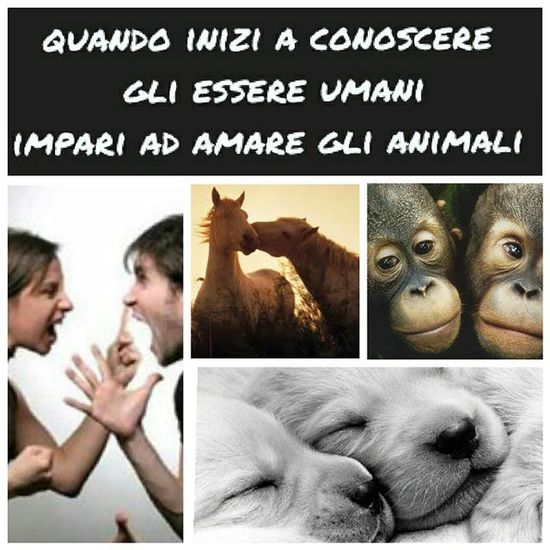 Amore , Animalslove , Uomini , Solosebelle , love, instadog, conoscere, igersitalia, TagsForLikes, tradire, fiducia, animali,