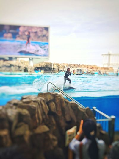 名古屋港水族館 ショー
