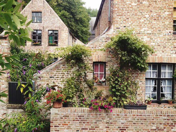 Potted plants by houses