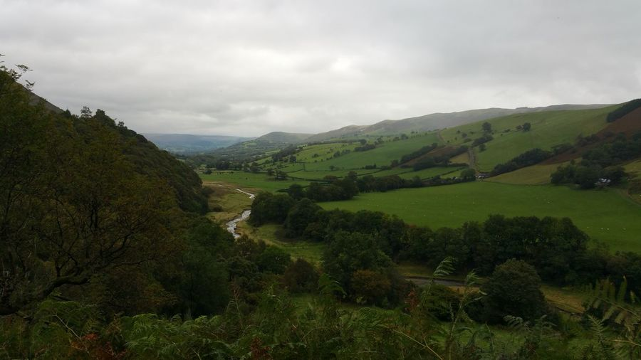 A Welsh valley Scenics - Nature Beauty In Nature Landscape Tranquil Scene Environment Cloud - Sky Tranquility Sky Plant Green Color Mountain Tree Nature Non-urban Scene Land Day No People Growth Idyllic Outdoors Rolling Landscape River Stream Wales UK Valley