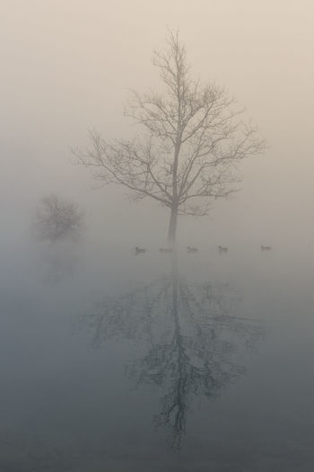 Bare tree by lake against sky during foggy weather