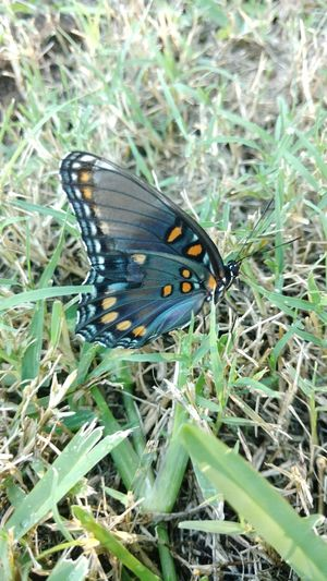 Butterfly Close-up Beauty In Nature Insect Exquisite Beauty Truecolors