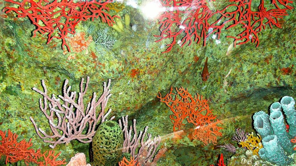 Autumn Beauty In Nature Close-up Day Fish Bowl Growth Nature No People Outdoors Plant Sea Life Tree UnderSea