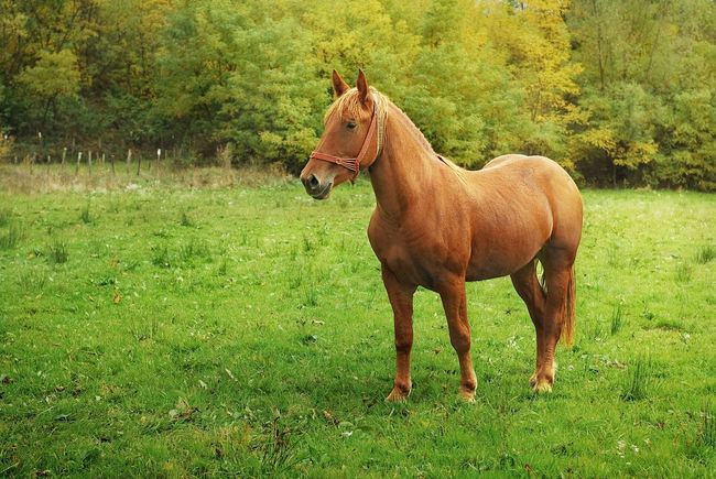 Nature Field No People Horse Outdoors Beauty In Nature One Animal Farm Mare Green Animal Animal Photography Beauty In Nature Landscape Beautiful Nature Beautiful Warm Colors Summer Autumn Majestic Sunny Warmlight Warm Light Pet Portraits