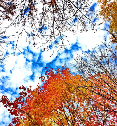 Low Angle View Sky Day Nature Beauty In Nature Cloud - Sky Outdoors Growth Tree No People Backgrounds Multi Colored Flower Branch Fragility