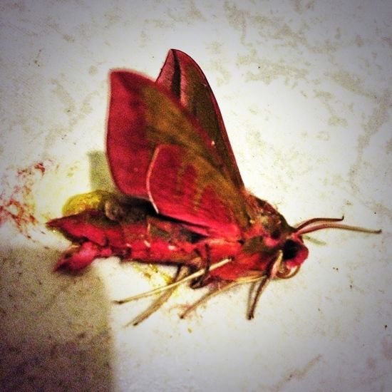 Check out this #sexy #moth I murdered. #nature #nightlife
