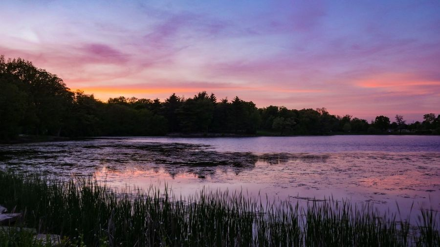 At dusk... Illinois Herrick Lake Reflection Popular Photos EyeEm Selects EyeEm Best Shots EyeEm Nature Lover Sky Water Plant Beauty In Nature Tree Tranquil Scene Lake Tranquility Scenics - Nature No People Reflection Sunset Landscape Pink Color Outdoors Nature
