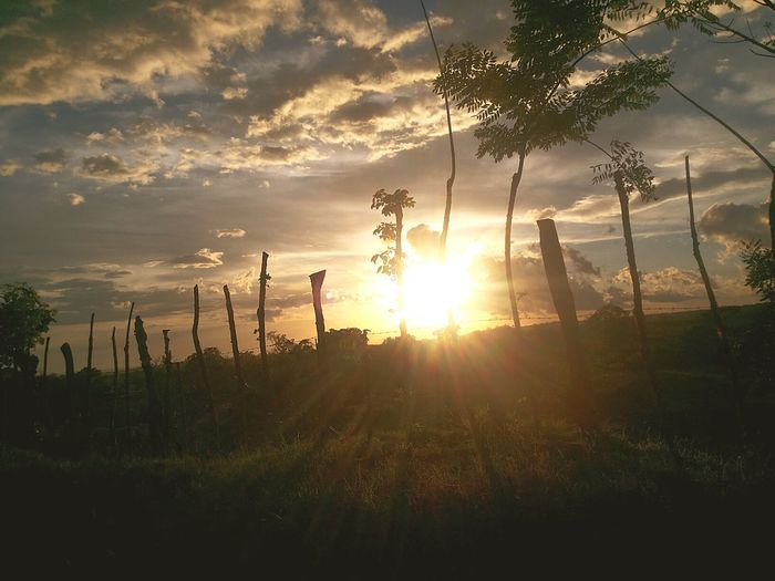 There are souls that fall like a sunset if the light surprises her/ Hay almas que decaen como un atardecer si la luz la sorprende Aida Cartagena Portalatín Sunset Nature Sun Tree No People Outdoors Sky Lovephotography  First Eyeem Photo