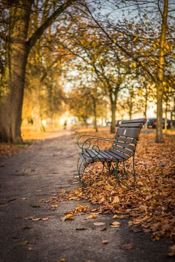 Situation vacant. Autumn Absence Nature Tree Empty No People Outdoors Tranquility Change Beauty In Nature Tranquil Scene Landscape Scenics Forest Branch Day My Year My View